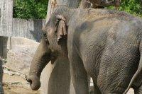 Elefant spielend Fotos und Bilder