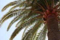 Palme Fotos und Bilder