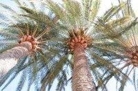 Palmen groß Fotos und Bilder