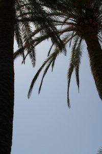 Palmen Fotos und Bilder